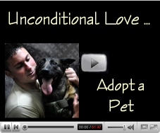 Unconditional Love ... Adopt a Dog vspace=